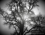Lonely Tree by AmaranthesLionHeart