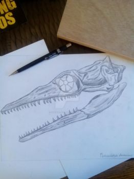 Skull of a Plotosaurus bennisoni by Stegoraptor