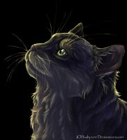 cat and light by busbyart