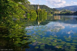 Morning at the lake Bled by ivancoric