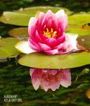 Reflecting Flower by alahay