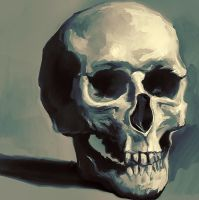 Skull study by Elsouille