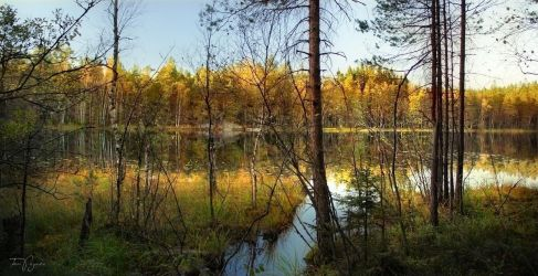 Autumn Forest Lake by Pajunen