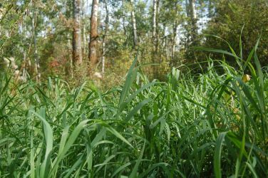 Stock 563 - Grass by pink-stock