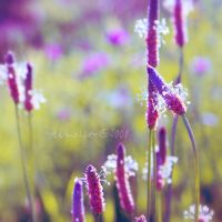 combo colors _02 by Aimelle