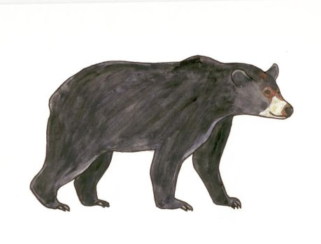 American black bear by mama-Lua