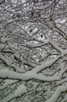Tree Snow Patterns by lesley-oldaker