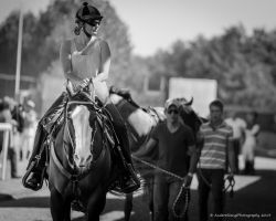 Horse Racing -Stay Frosty by AndersStangl