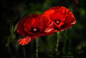Passion II by ChristineAmat