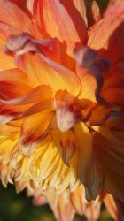 Flower on fire vordenstein by Galena1