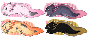 Axolotl Adopts | 1 of 4 OPEN by A1ternat1ve