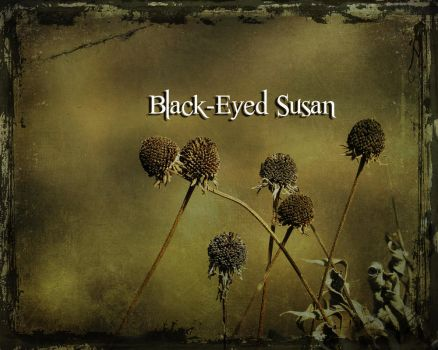 Black-Eyed Susan by fireless-eyes