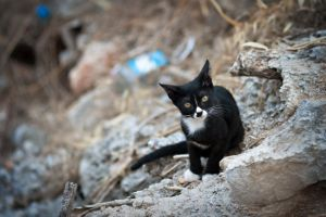 Greek cat by AstridT