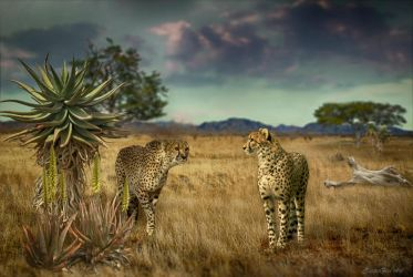 Cheetahs by EquiLo-101