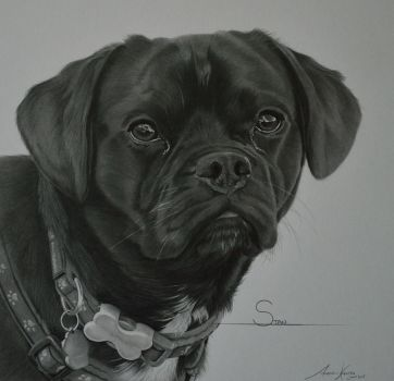 Commission - Puggle 'Stan' by Captured-In-Pencil