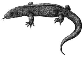 Palaeosaniwa canadensis by Biarmosuchus