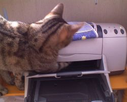 Printer by Woolfred