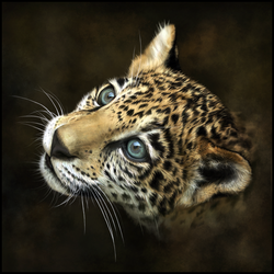 Jaguar Painting by photografever