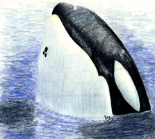 Keiko the orca by SurrealisticPillow88