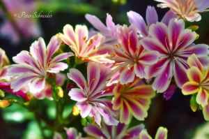 From the beautiful world of plants!(6462) by Phototubby