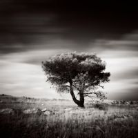 Lonely tree by tonchee