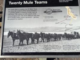 20 Mule Team by AthenaIce
