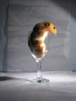 Hamster 13 by eldris-stock