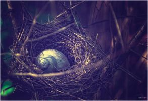 the nest by Tattoomaus78