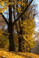 autumn trees by Su58