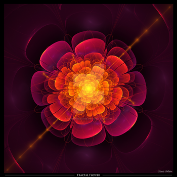 Fractal Flower by Vampiress196