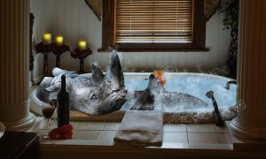 Rhino in a bath by rev-Jesse-C