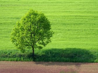 green and brown by Mittelfranke