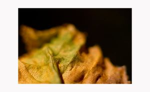 study of fallen leaves. by amazingPhotoboy