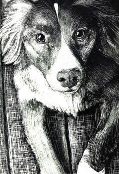 Scratch Art: Dog by sirlan