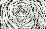 white tiger vertigo by A-D-McGowan