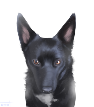 its a pup by virl0