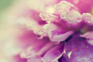 Pink drops by LineRH