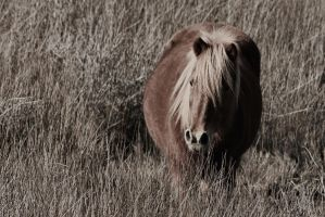 Lone Pony by picturesarelife