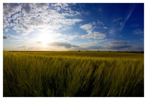 The Wheats in the Wind by madko
