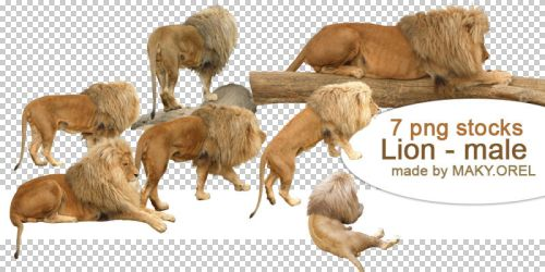 Lion - Male Png Stock by MAKY-OREL