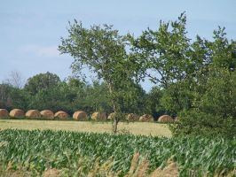 Haybales, Greenleaf, WI by charliemarlowe