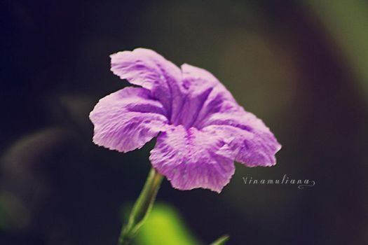 Purple Flower by thinkaboutanything