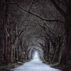 Tunnel Vision by aw-landscapes