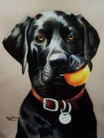 Black Lab with Ball by anniecanjump