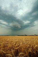 Storm cloud over the wheats by MaximeCourty