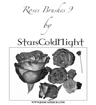 Roses 9 Brushes By Starscoldnight by StarsColdNight