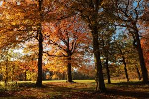 Autumn Colours by scotto