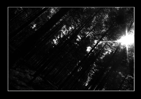 Black Forest by firlondion