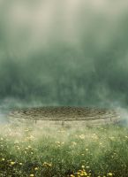 Foggy Grass BG 02 by the-night-bird