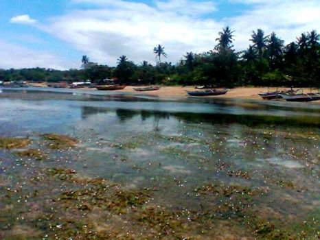 Low Tide at San Miguel Island Sanctuary by labellaxiaira